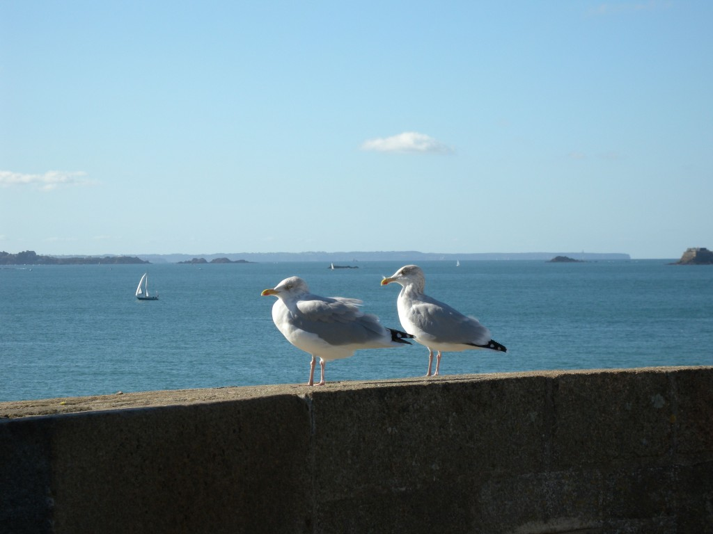 Sea Gulls on the Cote D'Emeraud