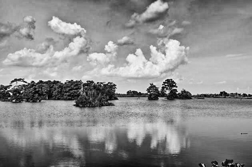 marshy rivers
