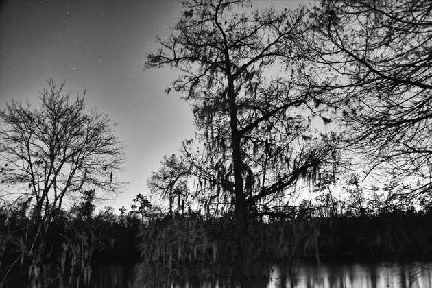 Swampy Night
